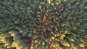 Flight over the trees. Sunset. Aerial footage stock video