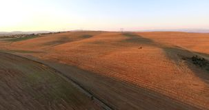 Flight over valley Ovce pole -Macedonia. Wheat crop filmed from the air, 4K stock video footage