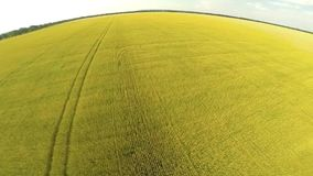 Flight over wheat field stock footage