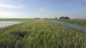 Flight of the paddy fields towards a fantastic sky. Drone on Italian rice fields in the Po River stock footage