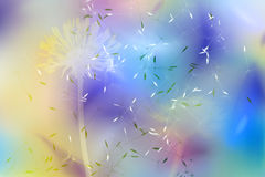 Flight in pastel. A white silhouette of a dandelion over a positive background of smooth color changes and flying seeds Stock Photo