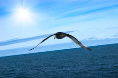 Flight of proud petrel. Under smooth sea Stock Photography