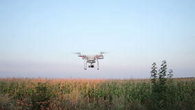 Flight Quadrocopters Over Corn Field stock footage