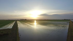 Flight of the rice fields with a fantastic light. Drone on Italian rice fields in the Po River stock footage