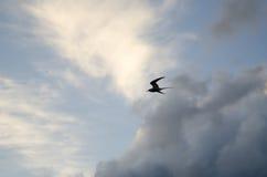Flight. Stock Photo