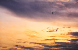 The flight. Seagull in the skies looks so calm Royalty Free Stock Images