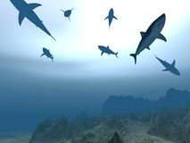 Flight of sharks Royalty Free Stock Photo