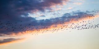 Flight at sunset Stock Photo