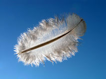 Flight to a feather. A feather on a background of the sky stock photo