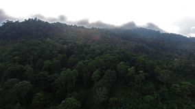 Flights above jungle in Thailand on Samui island. Aerial view on road in forest. Sunset. Sun light stock footage