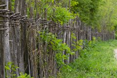 Flimsy rustic wicker fence alongside the rural road. Rustic wicker fence alongside the rural road in lush greenery, something that was often surrounding royalty free stock image