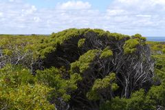 Flinders Chase national park Royalty Free Stock Photography