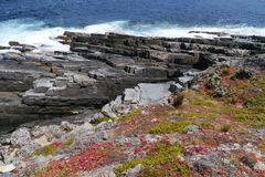 Flinders chase national park. Succulent plants on the rocks of Flinders Chase national park and the breakers of the Southern ocean on Kangaroo island in Royalty Free Stock Photography