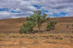 Flinders pasma 002 Zdjęcie Royalty Free