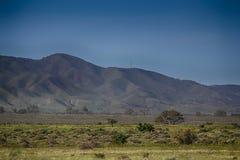 Flinders range, South Australia. Morning light purples the Flinders range Stock Images