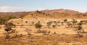 Flindersområdelandskap. Södra Australien. fotografering för bildbyråer