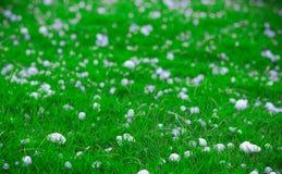 Flingor och bollar av iskristaller på grönt gräs efter en hagelstorm som verkar scenisk i ett grunt djup av fältlandskapbilden Arkivbild