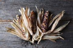Flint Corn Cobs med skal på den lantliga Wood tabellen royaltyfria bilder