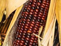 Flint corn Stock Photos