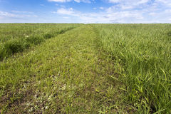 Flint Hills trail in green grass Stock Photography