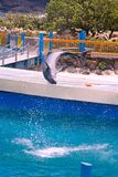 flip delfinów zdjęcia royalty free
