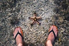 Flip-flop y estrellas de mar fotografía de archivo libre de regalías