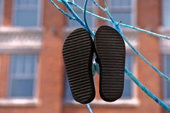 Flip-flops on blue branch Royalty Free Stock Photography