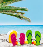 Flip flops and palm tree by the sea Royalty Free Stock Images