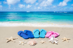 Flip flops, seashells and starfishes Royalty Free Stock Photos