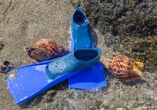 Flipper und zwei Muscheln auf dem Meer setzen auf den Strand Stockbilder