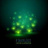 Flireflies que brilla intensamente Imagen de archivo libre de regalías