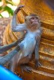 Flirtender Affe, Thailand Stockfotografie