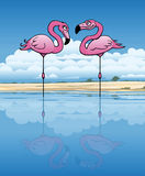 Flirting Flamingos Stock Photo