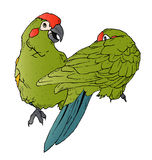 Flirting Parrots Stock Image