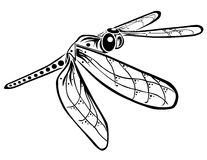 Flitting Dragonfly Royalty Free Stock Images