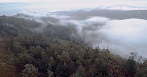 Fliying avec le brouillard au-dessus de la forêt clips vidéos