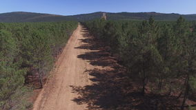 Fliying over firebreak, aerial view with pine tree forest stock video