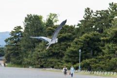 Fliying stork i stenträdgård Royaltyfria Foton