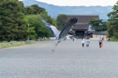 Fliying stork in stone garden Royalty Free Stock Image
