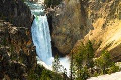 Fäll ned nedgångar av Yellowstone River Arkivfoto