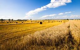 Fällige Getreide Stockfotos