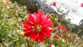 Fllower в холмах Стоковая Фотография RF
