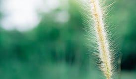 Fllower da grama da mola no fundo fresco da natureza do nascer do sol Imagens de Stock Royalty Free