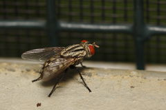 Flly. Fly resting on a park Stock Photography