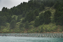Floaters of Hitaua Bay Mussel Farm with mountains, New Zealand. Stock Photo