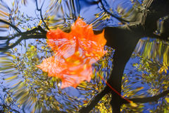 Floating autumn leaf on the water Royalty Free Stock Photos