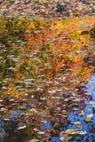 Floating Autumn Leaves Stock Photo