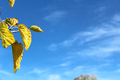 Floating autumn leaves. Some autumn leaves floating in front of a beautiful blue sky Stock Photos