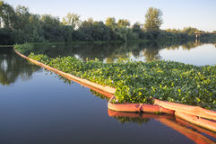 Floating barrier for control of invasive plant water hyacinth. Highly problematic invasive species at Guadiana River, Badajoz, Spain Stock Photos