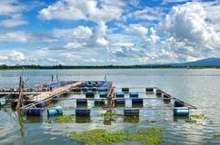 Floating basket fish. Stock Photos